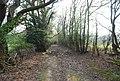 Bridleway leading NE from Burwash Weald - geograph.org.uk - 1253490.jpg