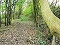 Bridleway west through Redlodge Plantation - geograph.org.uk - 1240142.jpg