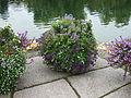 Britzer Garten Rundgang 05.jpg