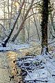 Brocas sous la neige 28.jpg