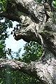 Buchach-Gnizdo-lyp-n2-14070900.jpg