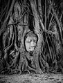 Buddha Head in Tree Roots, Wat Mahathat, Ayutthaya.jpg
