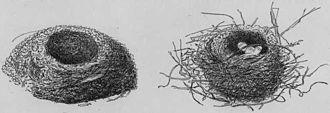 Tomtit - Illustration of South Island tomtit nests (1888)