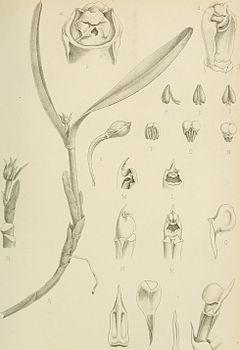 240px bulletin de l%27herbier boissier (1893 1908.) (19816125414)
