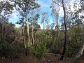 Bush of Moreton Island, Queensland, Australia.JPG