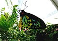 Butterfly (498147344).jpg