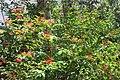 Butterfly Rainforest FMNH 45.jpg