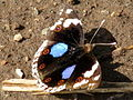 Butterfly in Great Rift Valley.JPG