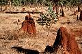 CSIRO ScienceImage 218 Termite Mounds.jpg