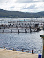 CSIRO ScienceImage 7413 Atlantic salmon marine cages.jpg