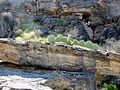 Cactus, Montezuma Well (13742279564).jpg