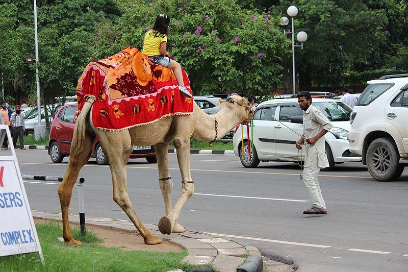 File:Camel ride1.jpg