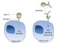 Cancer antibody receptor blockade.png