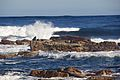 Cape of Good Hope 2014 5.jpg
