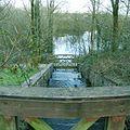 Carmarthen Reservoirs - geograph.org.uk - 146282.jpg