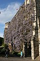 Castle Hotel, Wisteria in bloom - geograph.org.uk - 1277464.jpg