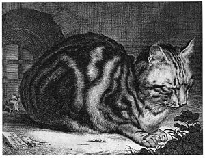 Cornelis Visscher - Cat Sleeping, 1657