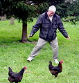 Catch the chickens (498261385).jpg