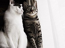 Cats pair.jpg