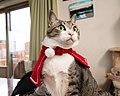 Cats wearing Christmas decoration; December 2019 (02).jpg