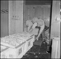 Centerville, California. Packing crates of cauliflower in refrigerator car for shipment to eastern . . . - NARA - 536029.tif