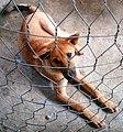 Chó cậu Cảm ở Phường 1 Đông Hà.jpg