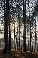 Changunarayan photowalk-WLV-3810.jpg