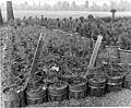 Charles A. Sprague Tree Seed Orchard Dedication (19563306798).jpg