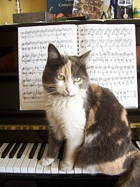 Charmant chat sur un piano droit