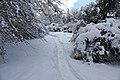 Chemin dans la neige (Colmar).jpg