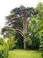Cheverny - château, parc (06).jpg