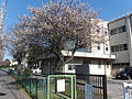 Chiba City Hanamigawa-Dai1 Elementary School.jpg