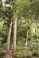 Christchurch Botanic Gardens, New Zealand section, detail, 2016-02-04-2.jpg