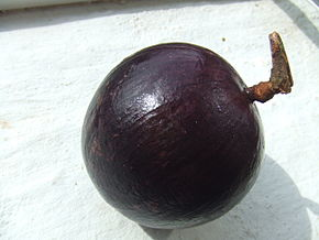 Chrysophyllum cainito, fruit