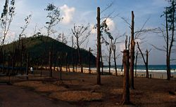 Typhoon damage in Chumphon province