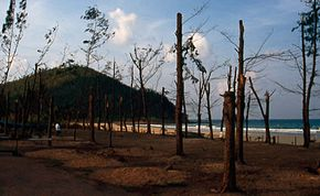 Chumphon typhoon damage 4.jpg