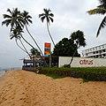 Citrus 3^, Hikkaduwa, Sri Lanka - panoramio.jpg