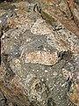 Clast-rich impact pseudotachylite (Sudbury Breccia, Paleoproterozoic, 1.85 Ga; Windy Lake Northwest roadcut, Sudbury Impact Structure, Ontario, Canada) 5 (46819354585).jpg