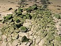 Cobbles on site of supposed Roman Causeway - geograph.org.uk - 1941967.jpg