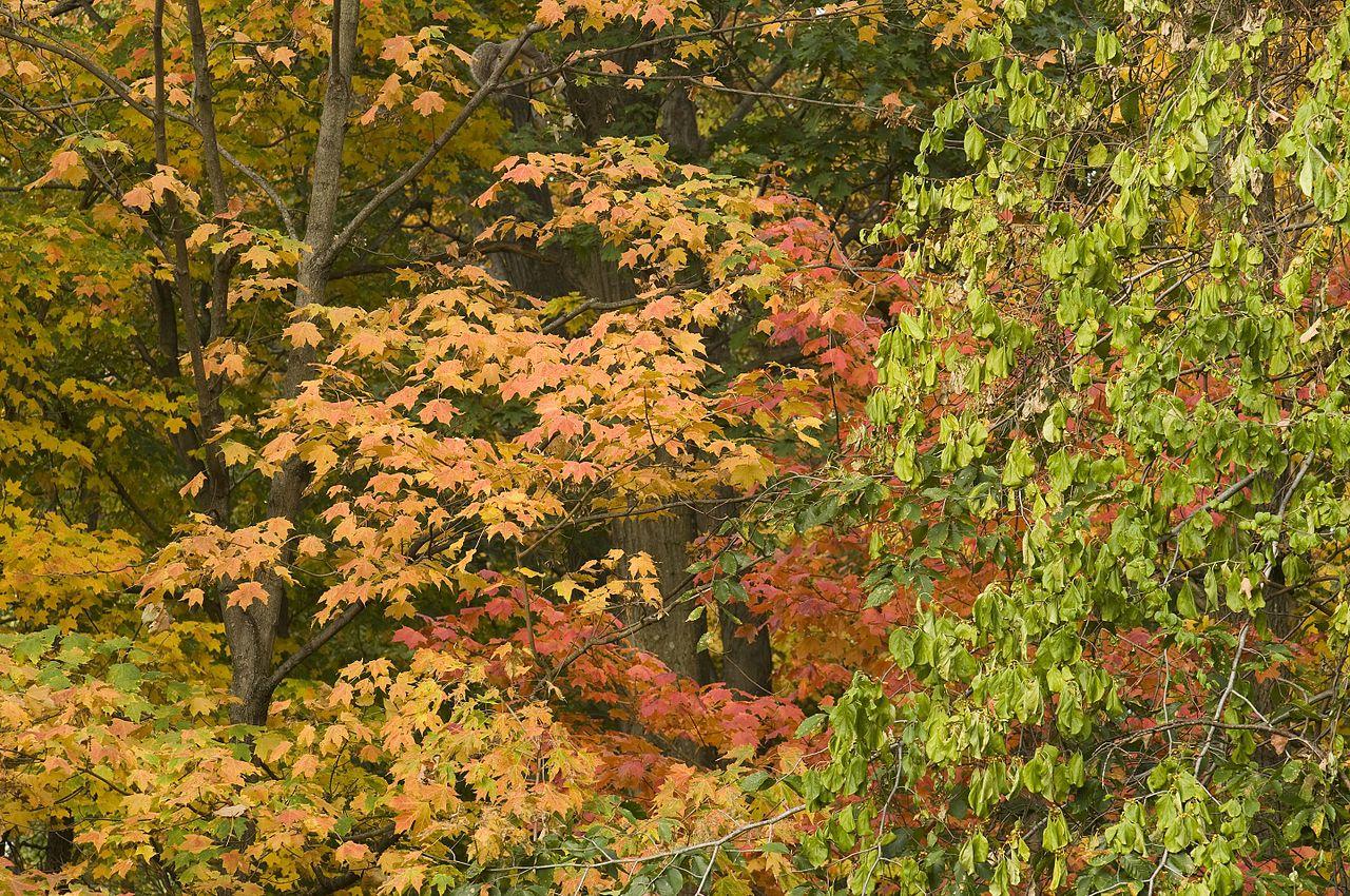 Colorful Fall.jpg