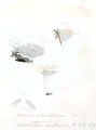 Coloured Figures of English Fungi or Mushrooms - t. 112.png