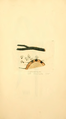 Coloured Figures of English Fungi or Mushrooms - t. 138.png