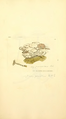 Coloured Figures of English Fungi or Mushrooms - t. 343.png