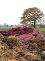 Colourful muck - geograph.org.uk - 1060703.jpg