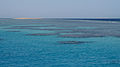 Coral reefs in the Red Sea.jpg