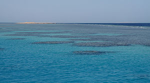 English: Coral reefs in the Red Sea, near Hurg...