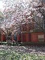 Cornell sage chapel western side in springtime.jpg