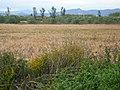 Corredora del Serral-llarg i camps del voltant P1480549.jpg