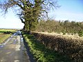 Country lane at Middle Plantation near Scampston - geograph.org.uk - 370466.jpg
