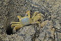 Crab (8420115948).jpg